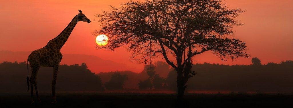 east-african-safari